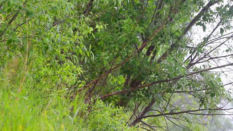 summer warm rain 4 Footage
