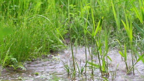 grass and reed Stock Video Footage