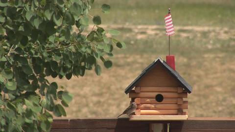 Bird goes into bird house Stock Video Footage