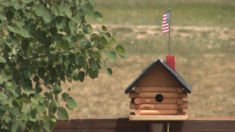 Bird goes into bird house Stock Video Footage