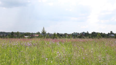 Butterflies on meadow among flowers in summer Stock Video Footage
