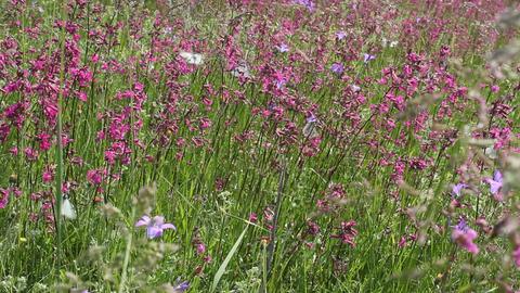Butterflies on flower field in summer 7 Stock Video Footage