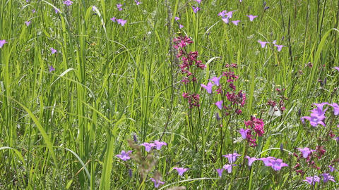 Butterflies on flower field in summer 3 Stock Video Footage
