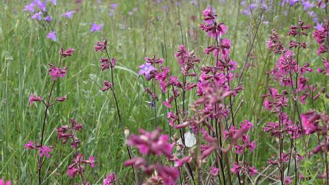 Butterflies on flower field in summer 9 Stock Video Footage