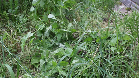 A pile of weeds in the garden Stock Video Footage