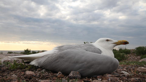 seagull ill Stock Video Footage
