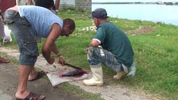 Cienfuegos Harber fisherman cutting fish on street Stock Video Footage