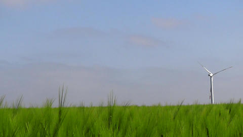 Dolly shot through beautiful green corn field Stock Video Footage