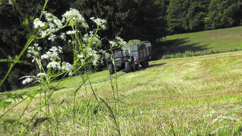 Tractor harvesting hay on a large meadow Footage