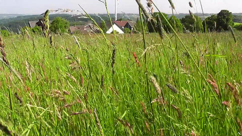 Slow dolly shot through a beautiful meadow in summ Stock Video Footage