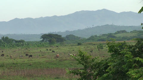 Cuba Landscape farmland Stock Video Footage