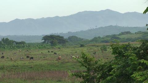 Cuba Landscape farmland Stock Video Footage