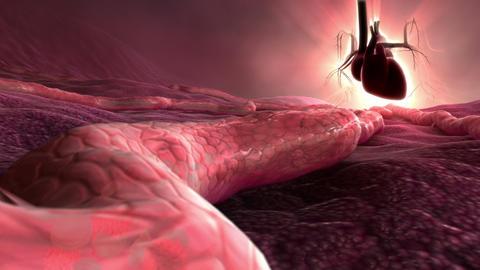 Blood Flow Animation