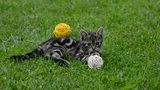 Playing Kitten stock footage