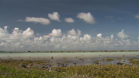 Flamingo's on Bonaire Stock Video Footage