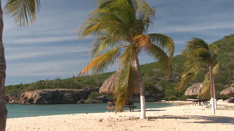 Palm trees on beach Stock Video Footage