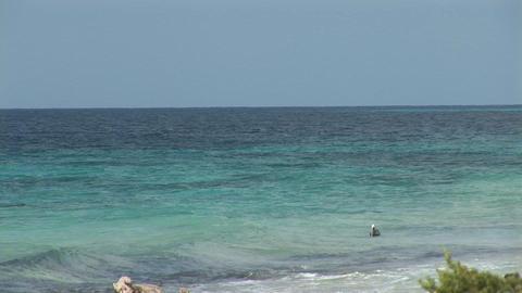 Pelican on ocean Stock Video Footage