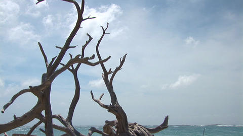 Driftwood and ocean Stock Video Footage
