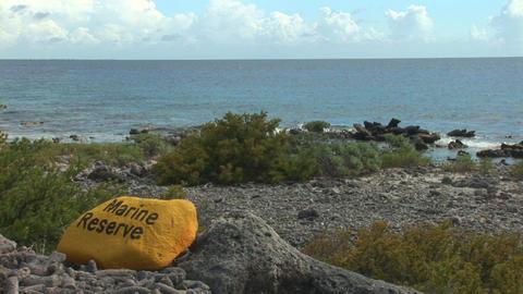 Marine reserve Footage