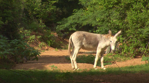 Donkey looks up Stock Video Footage