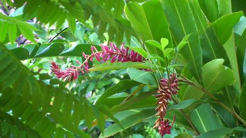 Trinidad Flowers in garden Stock Video Footage