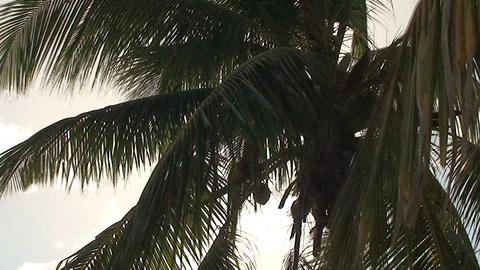 Trinidad Playa Ancón beachview palmtree Stock Video Footage