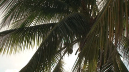 Trinidad Playa Ancón beachview palmtree Footage