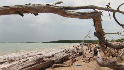 Driftwood on beach Stock Video Footage