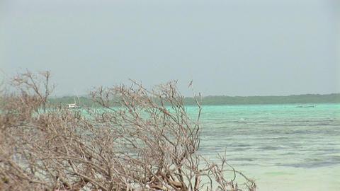 Mangroves Stock Video Footage