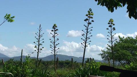 Valle de los Ingenios Hacienda landscape Stock Video Footage