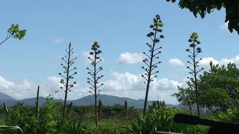 Valle de los Ingenios Hacienda landscape Footage