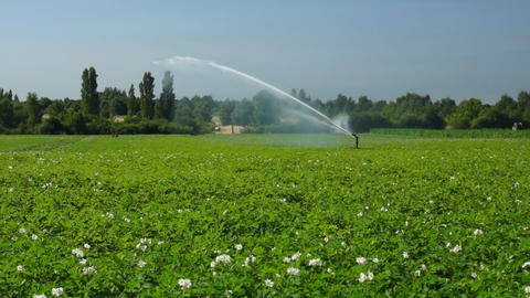 Agricultural sprinkler at work Stock Video Footage
