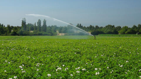 Agricultural sprinkler at work Footage