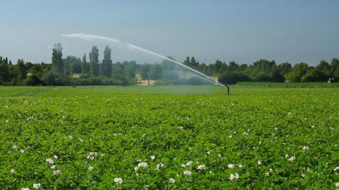 Agricultural sprinkler at work Stock Video Footage