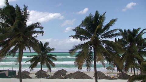 Varadero Palmtrees and beachview Stock Video Footage