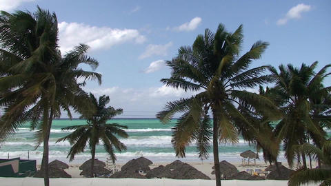 Varadero Palmtrees and beachview Footage