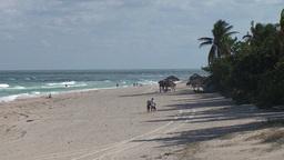 Varadero Palmtrees and beachview 3 Footage