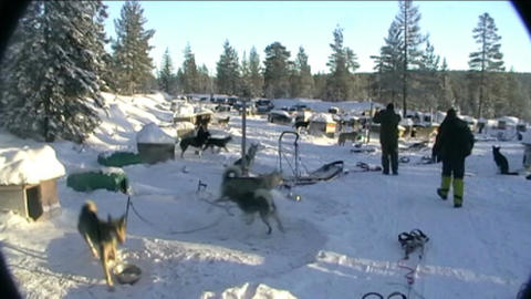 Norway, sled dogs ride Footage