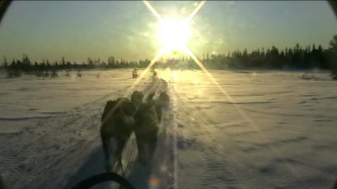 Norway, sled dogs ride at sunset Stock Video Footage