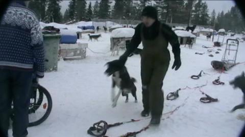 Noorwegen Ljordalen sledehond wordt opgehaald Stock Video Footage