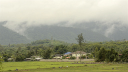 Thai Farmers in Rice Paddy with Foggy Mountain Stock Video Footage