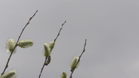 Bee in flower flying away slowmotion 400fps 2 Stock Video Footage