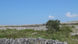 Burren Landscape 1 Footage