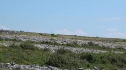 Burren Landscape 3 Stock Video Footage