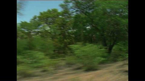 Landscape from train Zimbabwe Footage