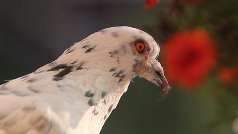portrait of a bird Stock Video Footage