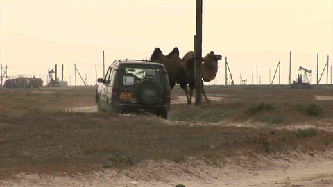 Car on Steppe Camels Oil Kazakhstan Stock Video Footage