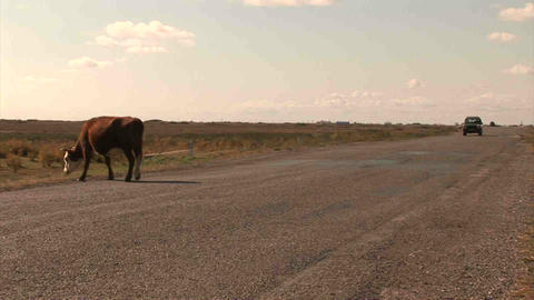 Car Roadside Cow Kazakhstan Footage