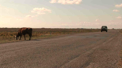 Car Roadside Cow Kazakhstan Stock Video Footage