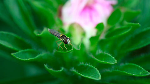 Fly Stock Video Footage